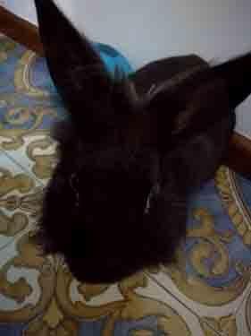 Rocco il coniglio