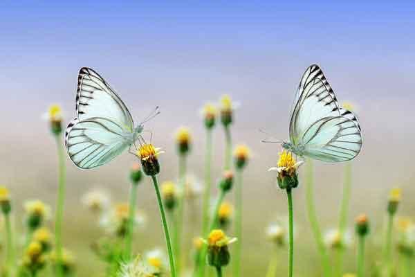 natura-e-farfalle-di-marco-ferrara