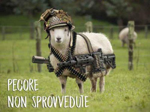 Pecore non sprovvedute