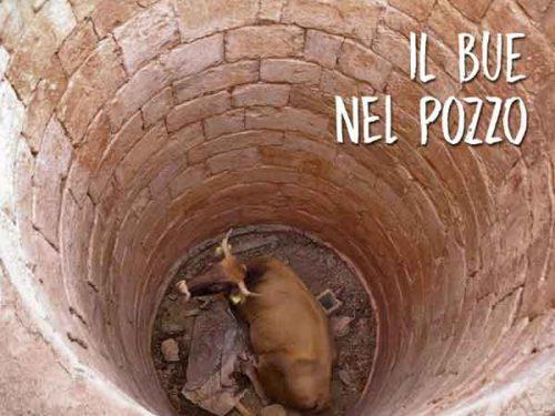Il bue nel pozzo